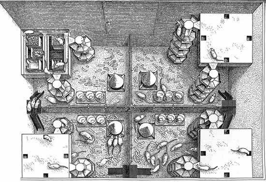 John Calhoun's Mice Utopia Experiment